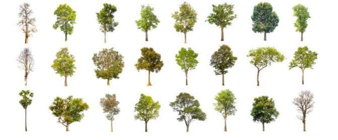 16 видов древесины